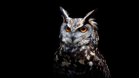 owl background 2560x1440 owl background 1440p resolution hd 4k