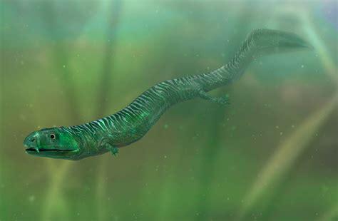 crassigyrinus giant amphibian crassigyrinus dk find