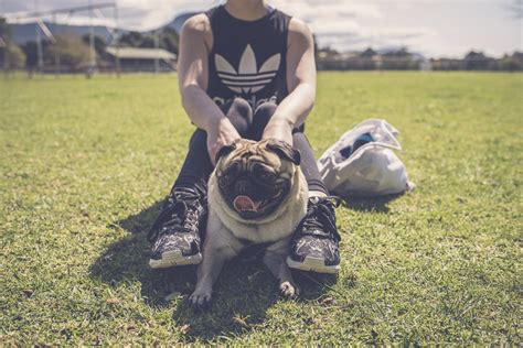 why you should get a pug why you should rescue a pug or pug cross the pug diary
