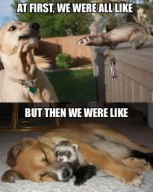 How To Tell If A Dog Is Blind 45 Funny Dog Memes Dogtime