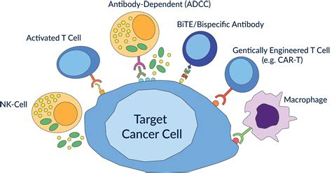cell based immunotherapy for cancer what is cancer immunotherapy