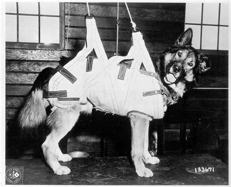war dogs 2 world war ii in pictures dogs of world war ii