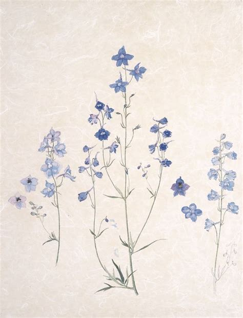 delphinium tattoo the 25 best larkspur ideas on