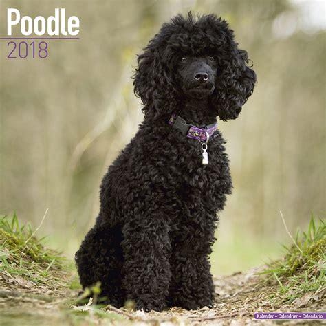 multi poodle lifespan poodle calendar 2018 pet prints inc
