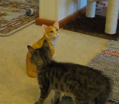 ladari di ceramica il gattino che lotta col suo simile di ceramica