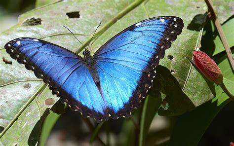 Immagini Di by Un Mondo Di Farfalle