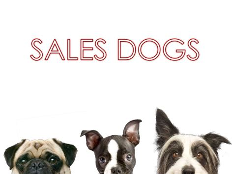 5 types of dogs 5 breeds of sales dogs