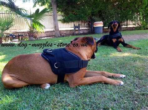 best harness for dogs best harness for small and large harness 163 24 57