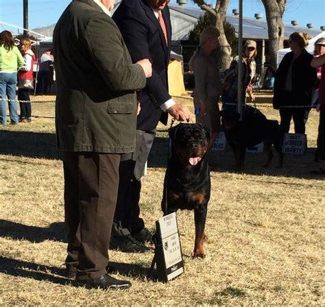 rottweiler specialty shows karl vom hause neubrand ii