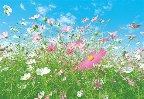 Walltastic Wall Murals meadow pink and white flowers wall mural