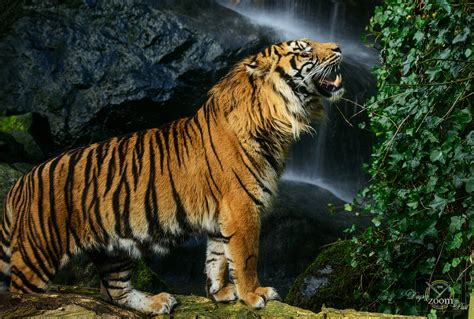 tiger tiger essential modern 0007462948 the best photography news features and reviews on ephotozine