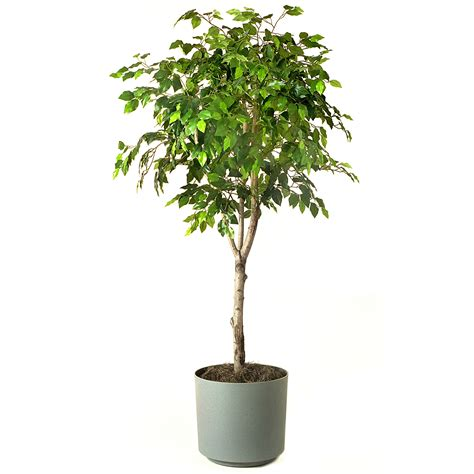 15 popular indoor plants for tropics eva furniture 15 best air purifying plants our service company