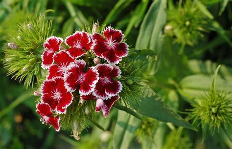 jenis tanaman hias berbunga indah