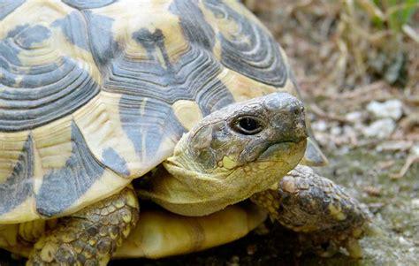 alimenti per tartarughe di terra alimenti per piccoli animali criceti pesci tartarughe