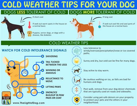 tips on a puppy cold weather tips for your the light of