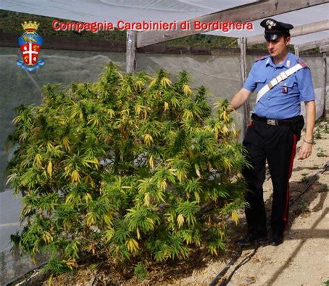 coltivare fiori in serra quot troppe spese quot al posto dei fiori in serra 800 piante di