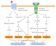 g protein coupled receptors quizlet biochemistry g protein coupled receptors gpcrs