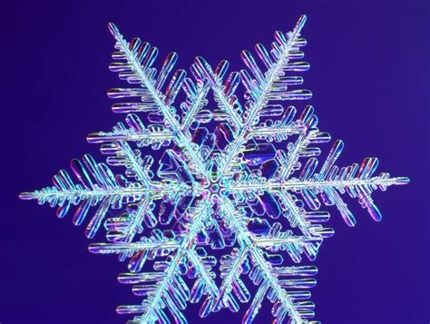 snowflake and snow crystal photographs real snowflakes christmas photo 9447390 fanpop