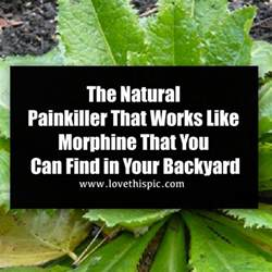 pets you can find in your backyard can you a in your backyard 28 images 5 perennial