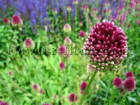 Uk Garden Flowers Flowers Uk Garden Flowers Delivery Bulbs