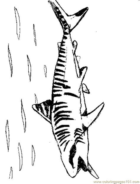 sand shark coloring page tiger shark coloring pages www imgkid com the image