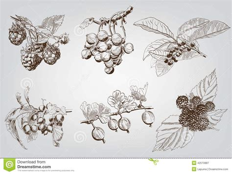 Handmade Sketches - set of berry stock vector image 42510887