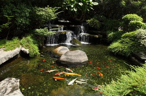 backyard coy ponds albany plattsburgh burlington vt outdoor water gardens waterfalls koi ponds in