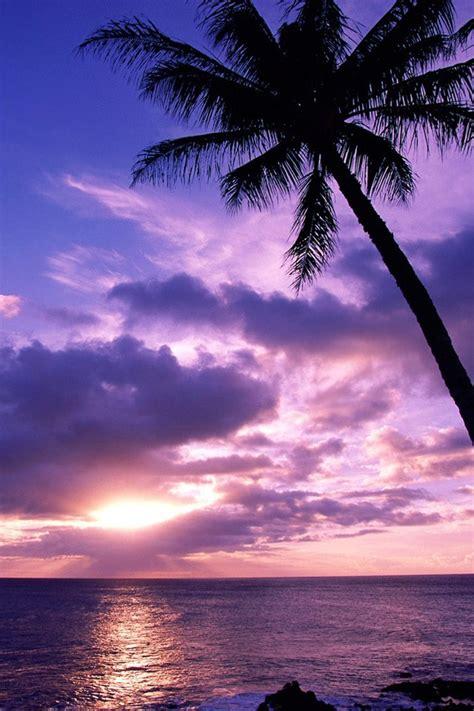 nature tahitian paradise sunrise beach ipad iphone hd