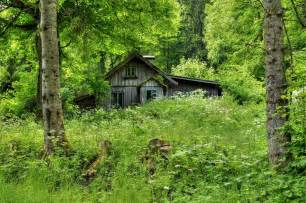 Forest House old forest home by burtn on deviantart