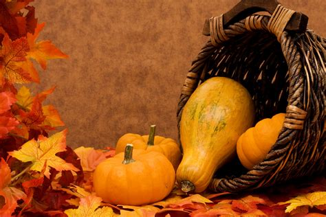 autumn harvest pumpkin wallpapers and images wallpapers