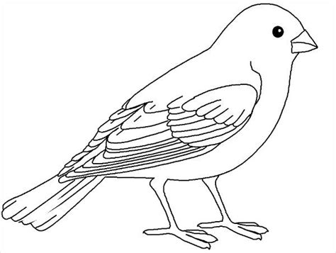 coloring pages birds realistic 20 bird coloring pages jpg ai illustrator download