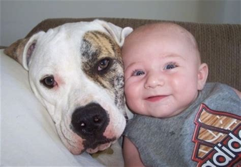 dogs with babies dogs bringing home the new human baby