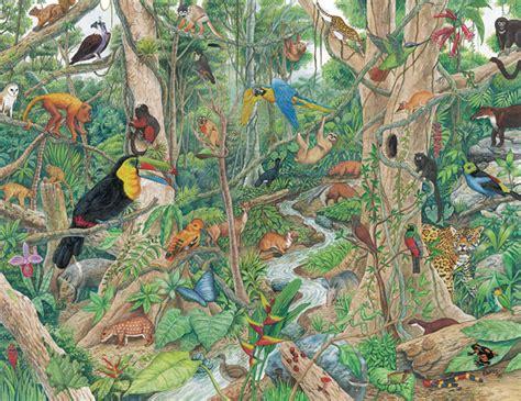 imagenes de animales y plantas de la selva los ecosistemas