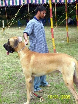 breeds in india different breeds in india