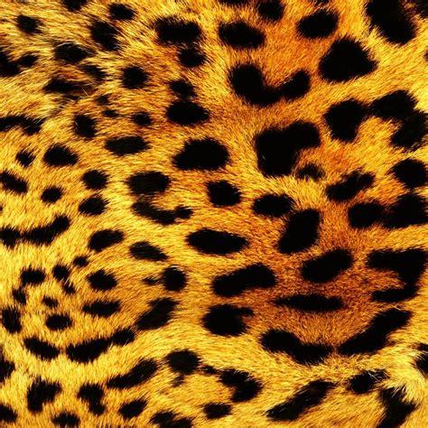 wallpaper dinding leopard download gratis macan tutul print gambar gratis macan