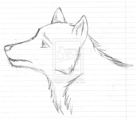 Sketches Wolf by Wolf Sketch Sketch Coloring Page