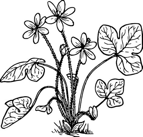 herb garden coloring page free pictures flower 10201 images found