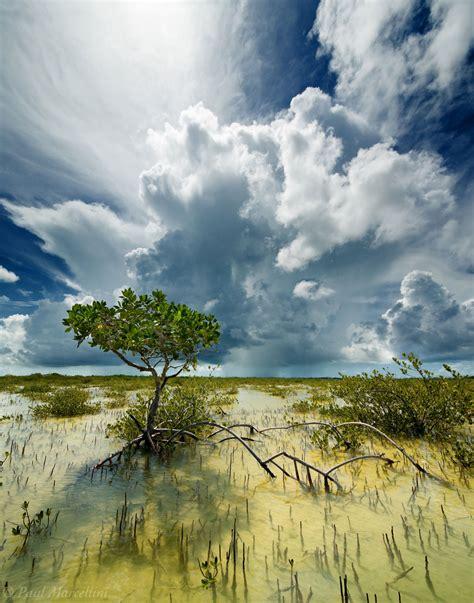 Landscape Photography In Florida Midday Mangrove Big Pine Key Florida Florida