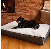 Super Orthopedic Lounge Dog Bed W/ Cream Sherpa  Snoozer