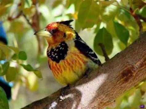 imagenes bonitas de animales videos de animales y paisajes youtube