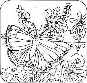 free coloring pages for free coloring pages of butterfly 40 coloring sheets