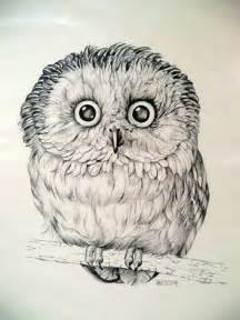 owl art in pencil love of owls pinterest