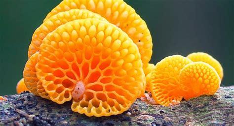 quiz  kingdom fungi quiz questions answers  personality test trivia quizzcreatorcom
