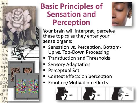 sense of haptics fundamentals of perception and implications for device design springer series on touch and haptic systems books psy 150 403 chapter 6 slides
