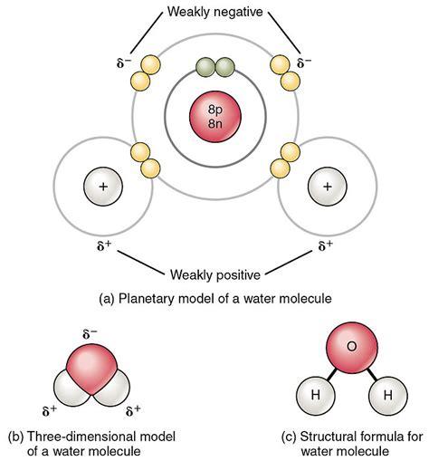 diagram of water molecule water principles of biology biology 211 212 and 213