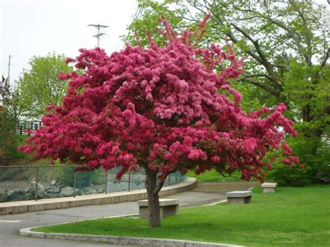 7 trees that look great in both the fall and the winter prairie crabapple tree fall color garden flowers plants