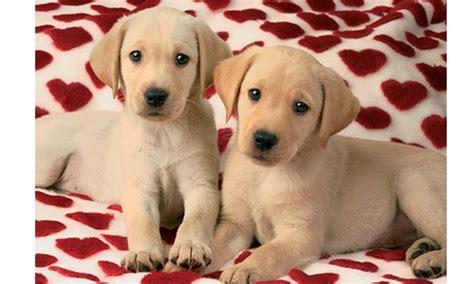 imagenes de animales enamorados imagenes de perros enamorados imagui