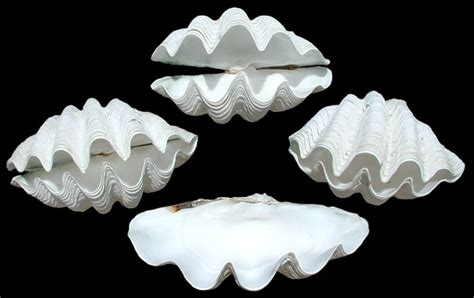 How To Make Paper Shells - clams unique gifts clam clam shells