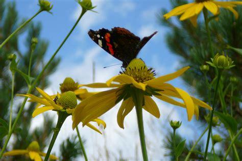 nostra signora dei fiori santuario nostra signora d costa sanremo visit italy