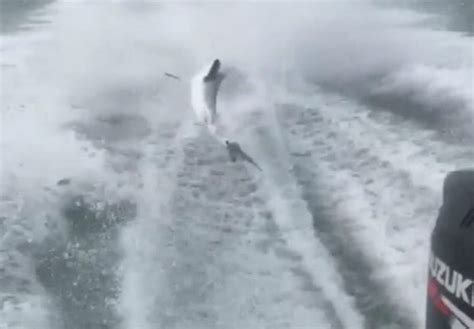 dragging shark behind boat names authorities id men dragging shark behind boat in